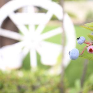 車輪とブルーベリー